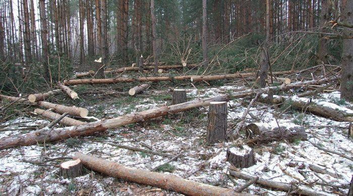Около 2 миллионов кубометров леса за год вывезено из Бурятии