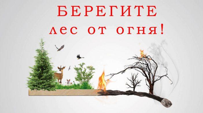 В Бурятии стартовал ежегодный детский конкурс  «Защитим лес от пожаров!»