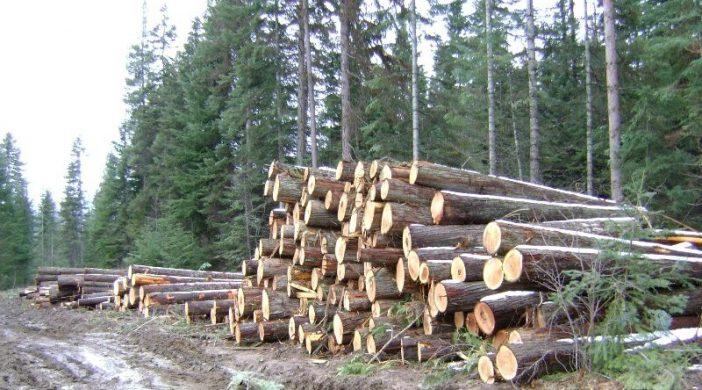 В Бурятии лесники массово проверяют лесозаготовителей